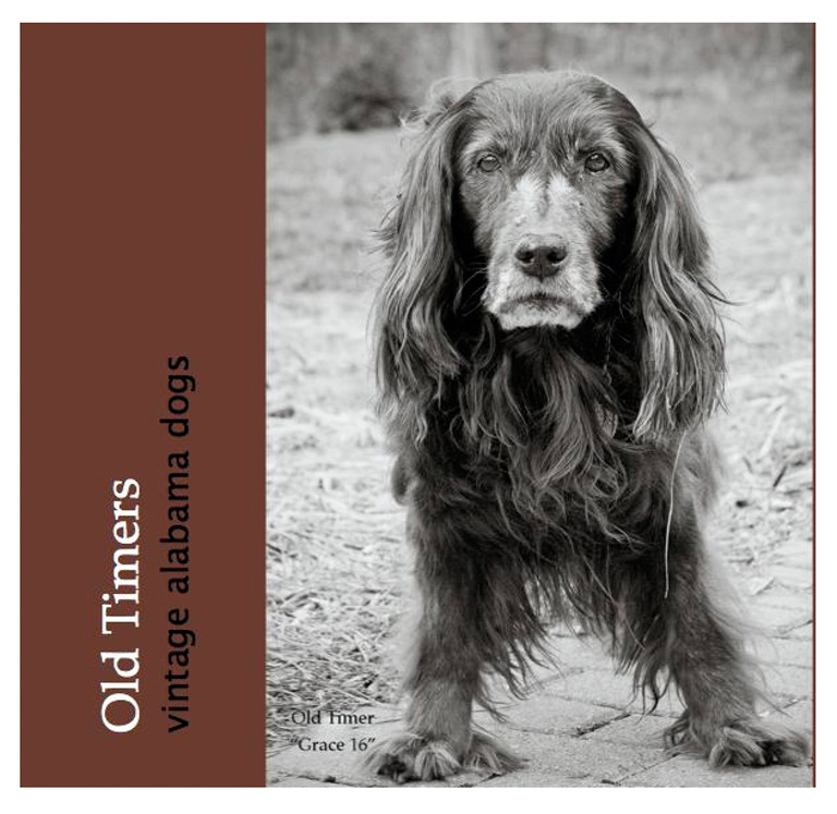 Dog photography coffee table book about older dogs.
