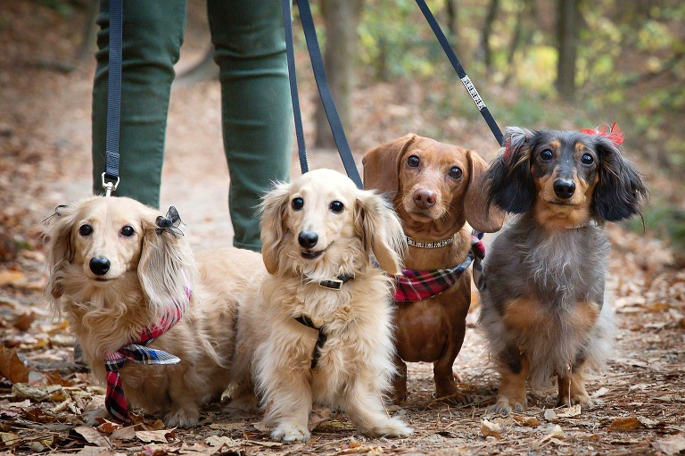 Photography pictures of four dogs outside