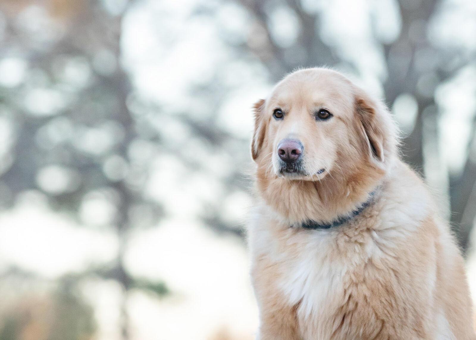 Pet photography portrait by Irene Gardner in Birmingham, Alabama